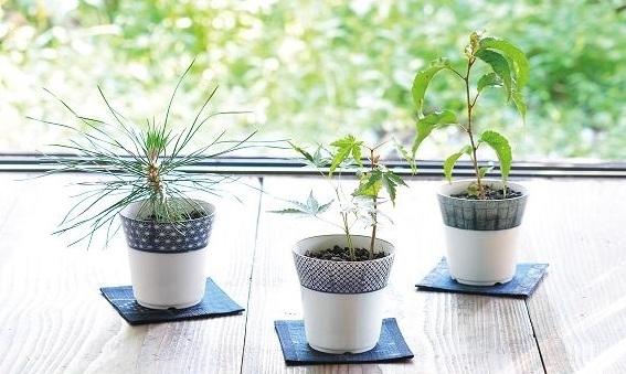 染付小紋盆栽栽培セット