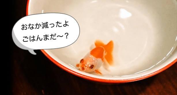 丼ぶり金魚