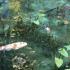 絶景と話題の「モネの池」!岐阜県関市、板取根道神社の鳥居の脇にある「名もなき池」をご紹介